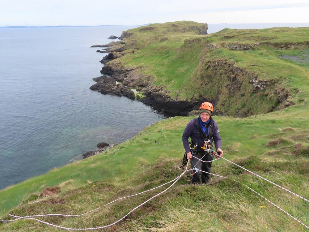 An intrepid surveyor, with the aid of ropes, undertakes a proper count of the puffin colony for the first time