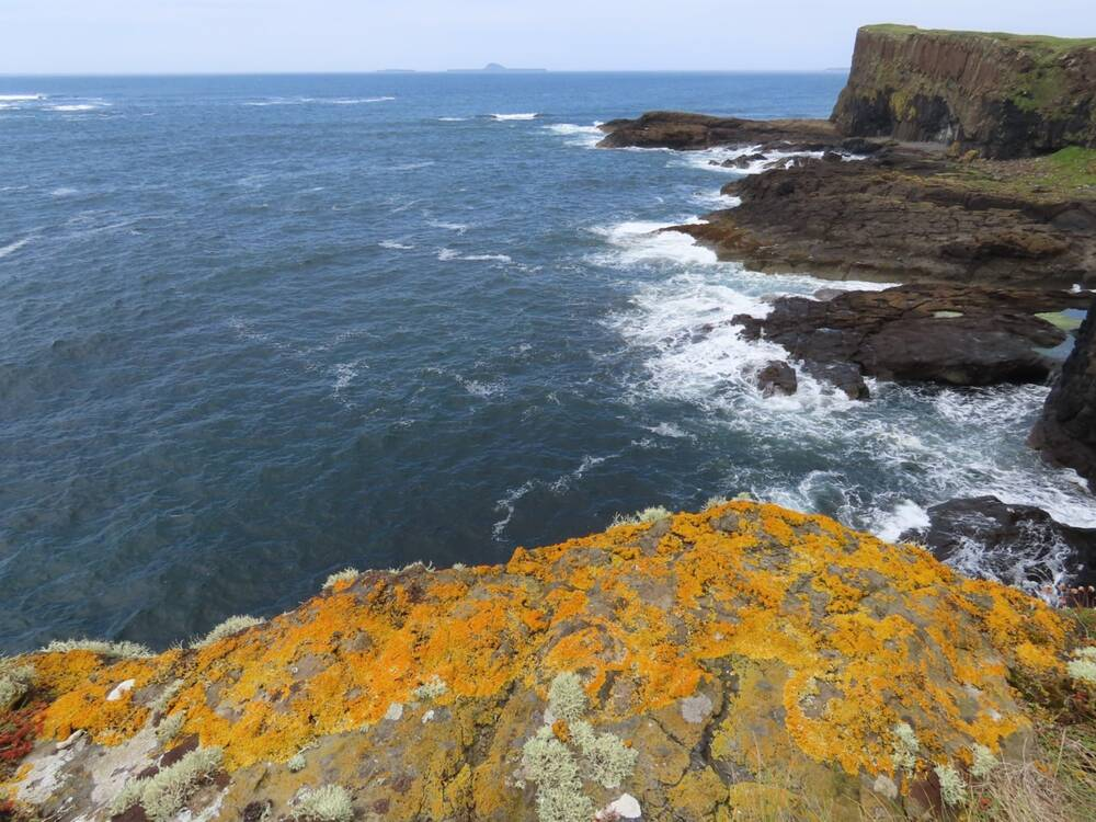 Bright orange lichen on rocks on Staffa