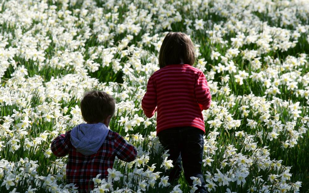 Two children run through a field of white daffodils.