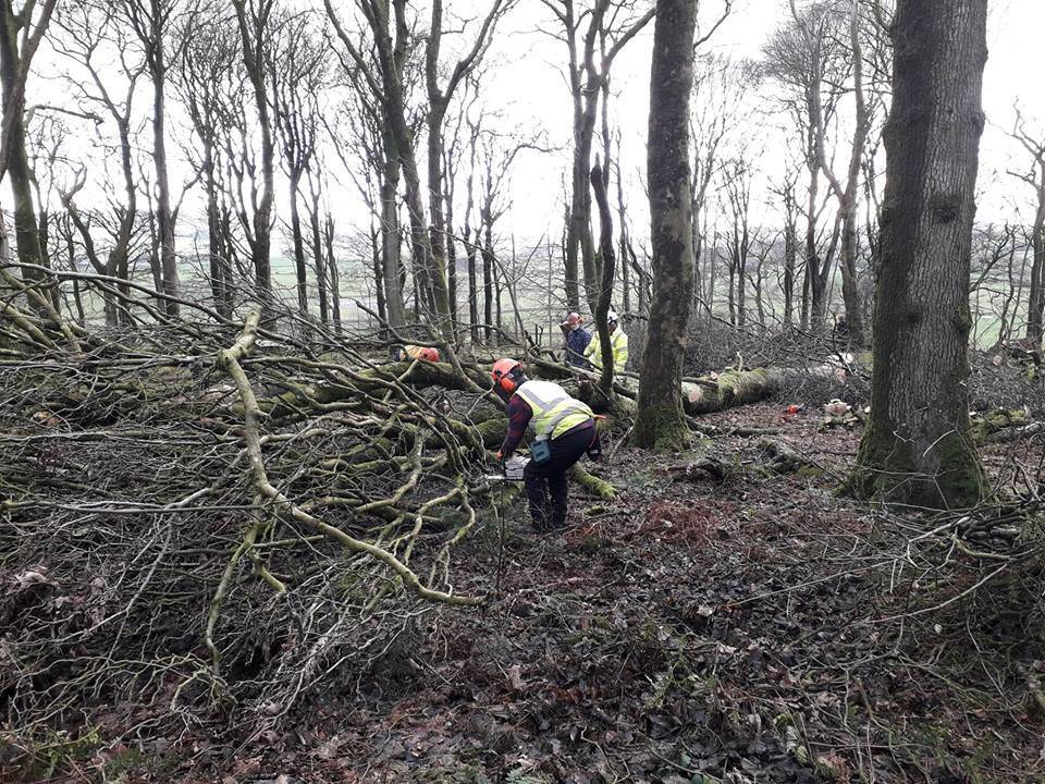 SRUC Barony students tackling large windblown hardwoods