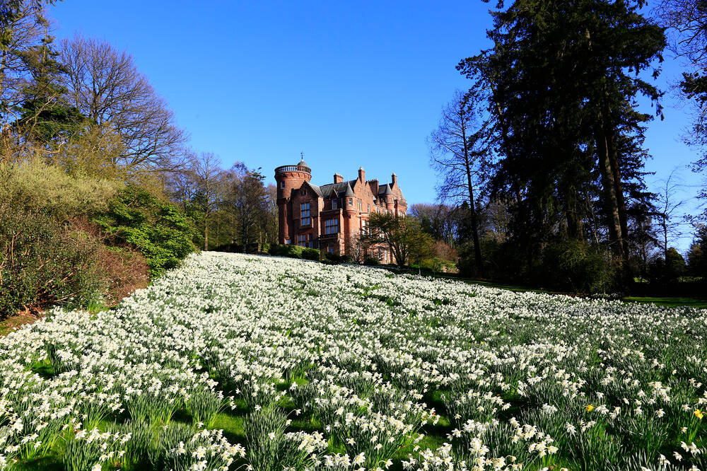 A view of Threave House from the bottom of a gently sloping hill. The foreground is carpeted with daffodils. Tall trees frame the photo.