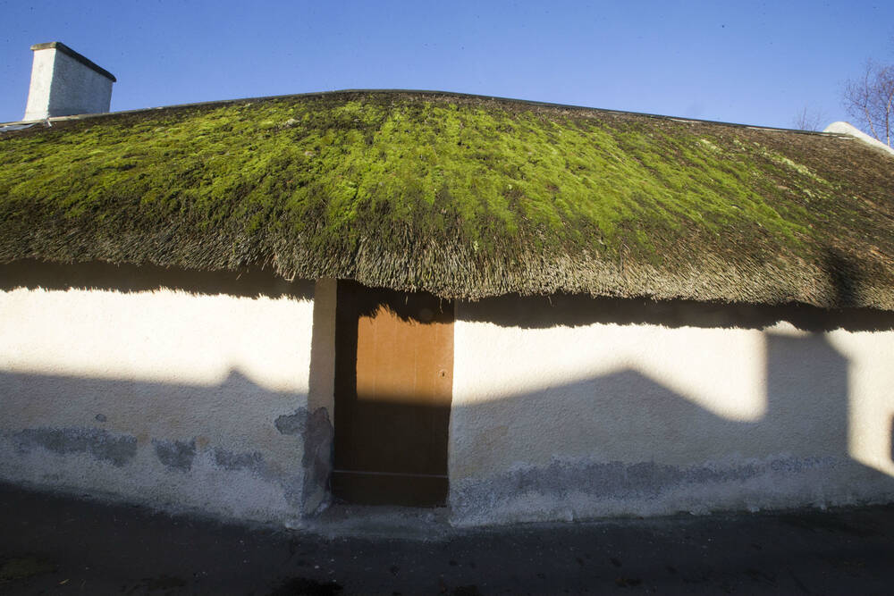 Moss growing on the thatched roof at the front of the cottage