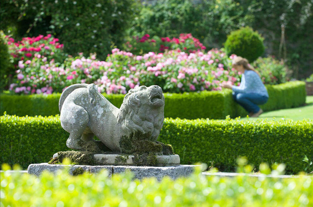 A stone statue of a lion stands in a rose garden, with beds surrounded by box hedges. A lady kneels in the background, examining a rose.