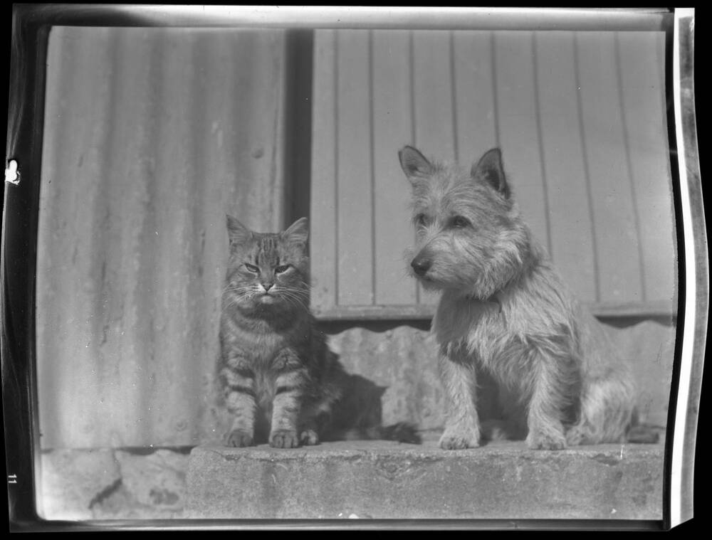A black and white photograph of a tabby cat and a small pale terrier sitting on a stone step in front of a metal house.
