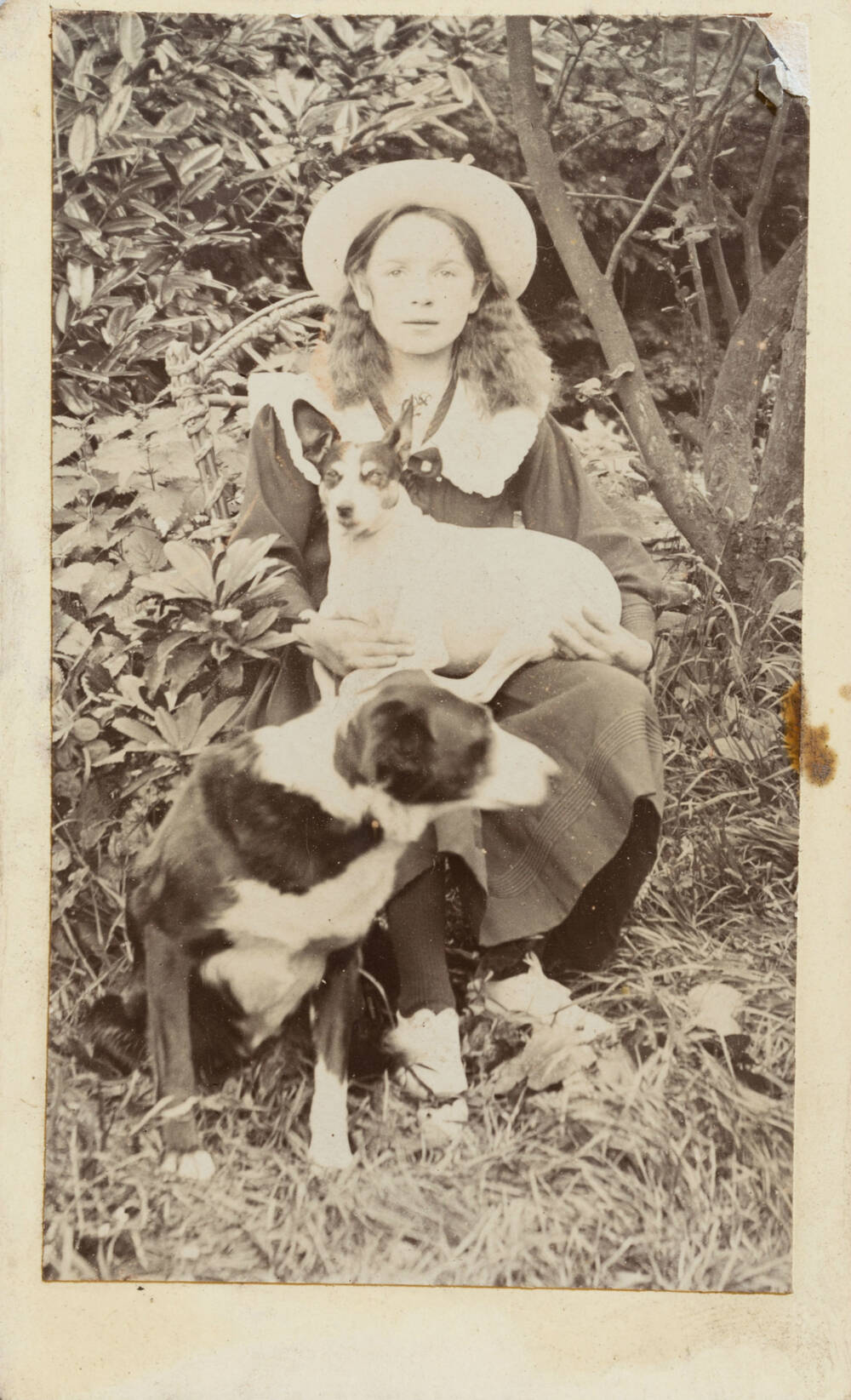 A black and white photo of a young woman wearing a hat sitting outside. She has a white dog on her lap and a dog at her feet.